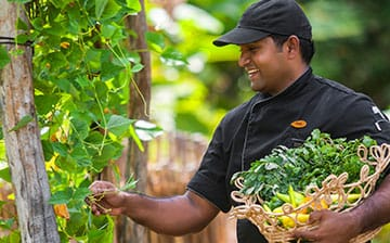 A Sustainable Kitchen Garden at Passekudah
